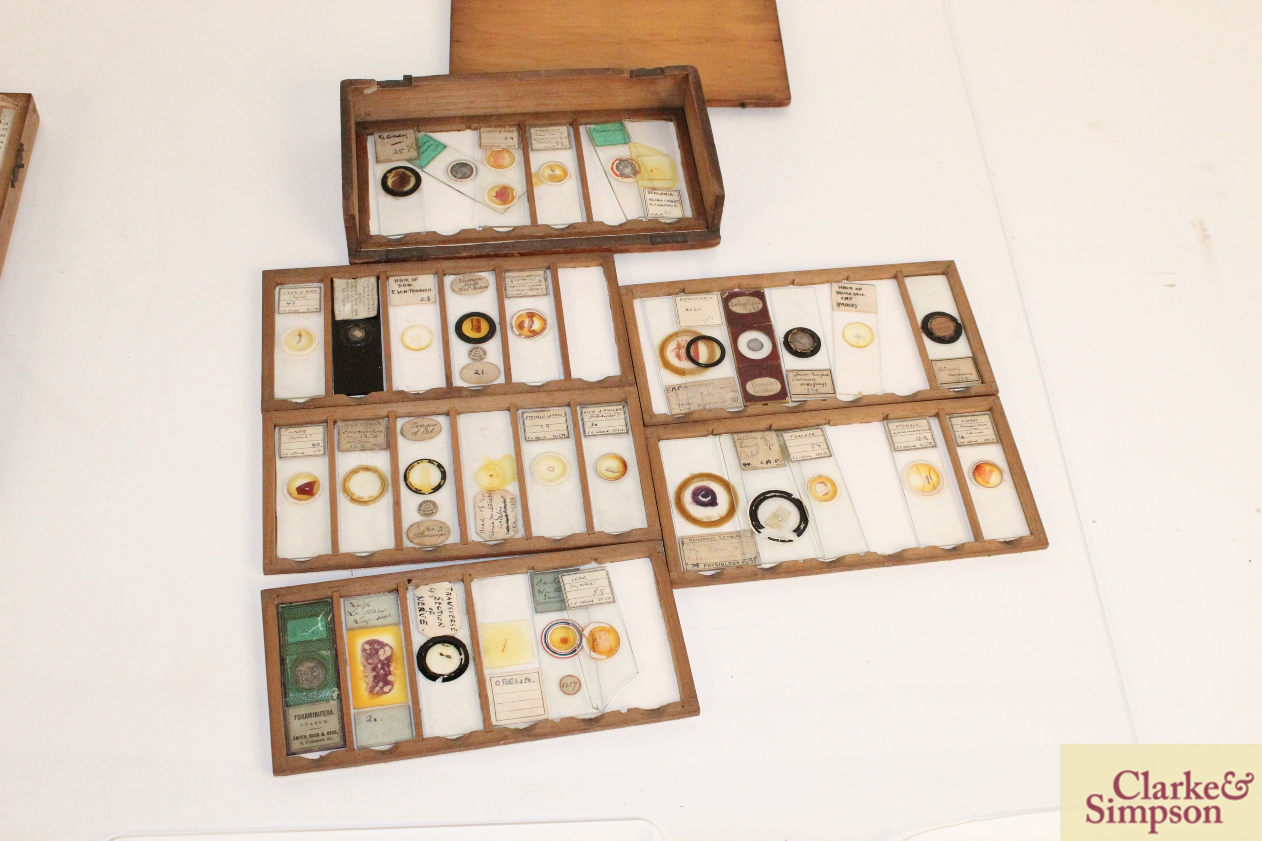 Three boxes of medical slides - Image 8 of 14