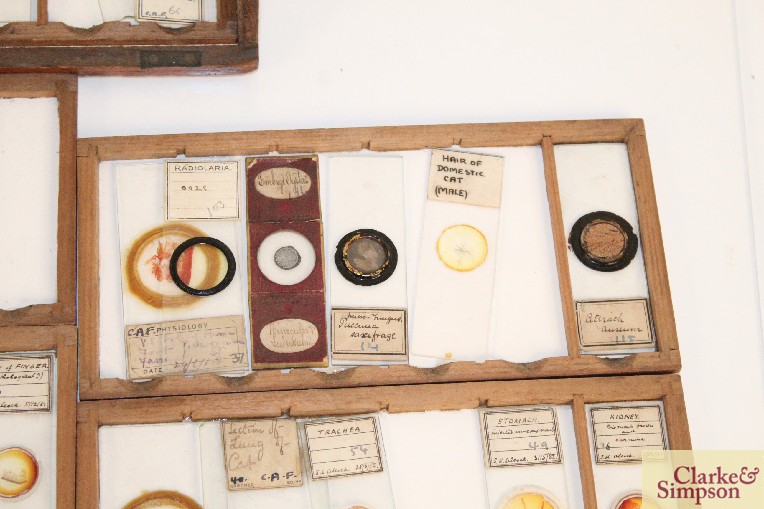 Three boxes of medical slides - Image 13 of 14