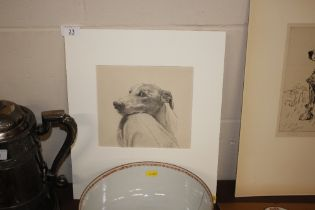 Carlyle Park - pencil sketch of a dog resting on a