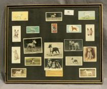 A framed montage of photographs and cards depicting Bull Terriers 30 x 38cm