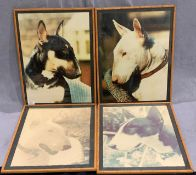 A set of four pictures of Bull Terriers in bamboo effect frames each 52 x 40cm