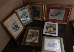 Seven framed photographs and prints of birds and animals
