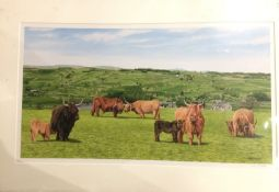 C L Morton, limited edition print of Highland Cattle, in mount, 32cm x 56cm,
