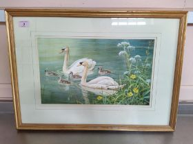 Neil Cox (1955-), watercolour of swans with cygnets, signed lower right,