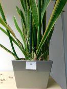 *Plant in Pot