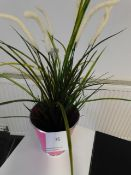 *Plastic Pampas Grass in Pot