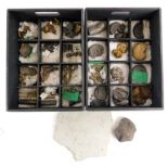 A collection of fossils, to include a number of ammonites etc.
