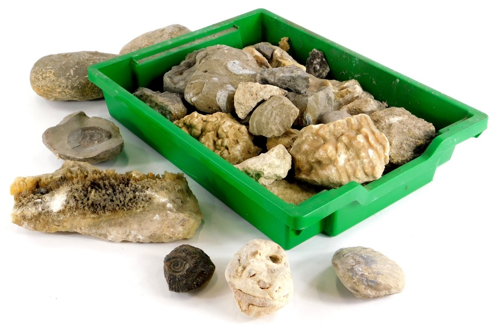 A quantity of fossils and mineral samples, to include an ammonite, a section of stalagmite, quartz