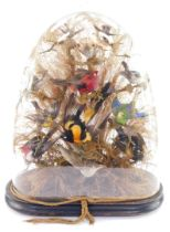 Taxidermy. A montage of humming and other exotic birds, twelve in total, modeled perched on branches