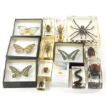 Various insect specimens in perspex cases, to include butterflies, tarantula, 11cm wide, etc. (a qua