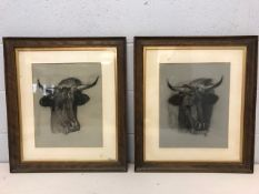 Pair of large framed charcoal drawings of cows, each approx 64cm x 56cm, one signed lower right,