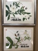 Pair of Chinese watercolour and ink paintings with Chinese character marks depicting butterflies