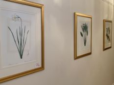 Group of nine gilt framed and glazed botanical prints