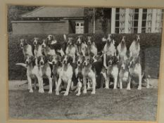 """Framed and glazed black and white photograph of Foxhounds """"Quorn 1931"""""""