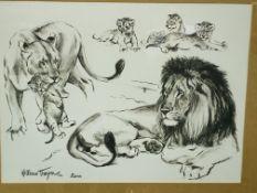 Four framed and glazed animal prints by W Timym