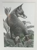 Framed and glazed pencil drawing of a fox, signed Clive Meredith