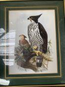 Framed and glazed prints of birds