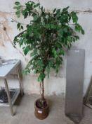 Decorative tree in pot
