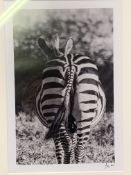 Two framed and glazed black and white photographs of African wild animals