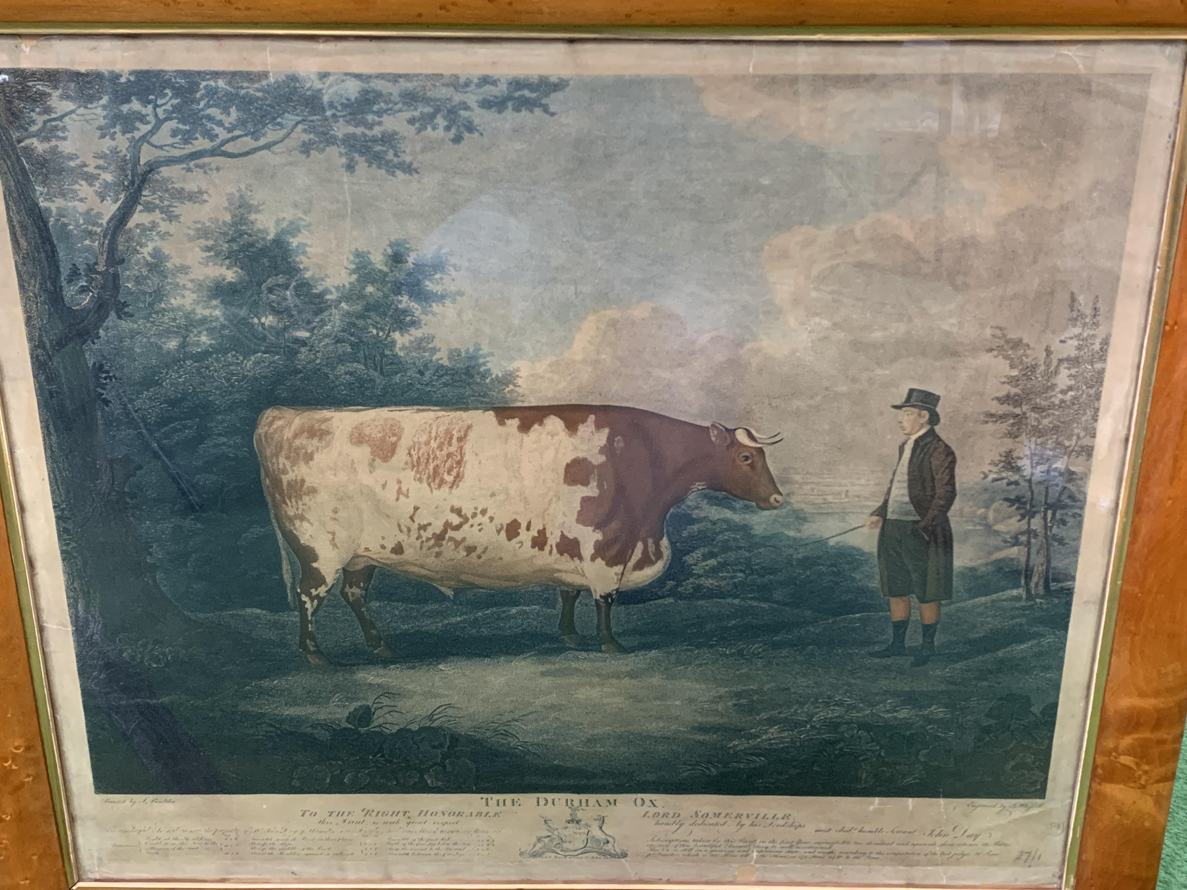 Fruit wood veneer framed and glazed coloured print of the Durham Ox - Image 2 of 3