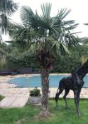 1 x Palm Tree Approx 4-Metres in Height - Ref: JB158 - Pre-Owned - NO VAT ON THE HAMMER - CL574 -