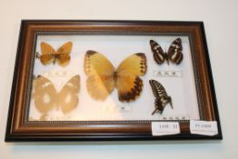 BUTTERFLY DISPLAY CASE Condition ReportAppraisal Available on Request- All Items are Unchecked/