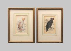 Ornithology, dreifarbiger Kakadu und PalmkakaduHandkolorierte Kupferstiche/Papier. Dar