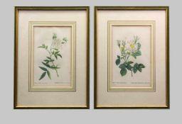 Les Roses, Alba-RosenKupferstiche/Papier. Zwei Tafeln mit weißen Bauernrosen aus dem