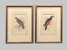Ornithology, Nestorpapagei und australischer PapageiHandkolorierte Kupferstiche/Papier