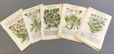 """Pflanzenlithographien 34 einzelne Lithographien aus """"Matthiolo Senensis Medici, Comm"""