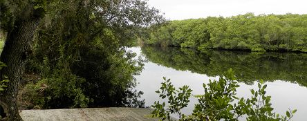 Experience the Peace River Preserve in Sunny Florida! Adjacent to Lot 17!