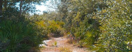 Experience Nature's Beauty in Charlotte County, Florida! Adjacent to Lot 33!