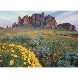 Beautiful Views in Navajo County, Arizona!