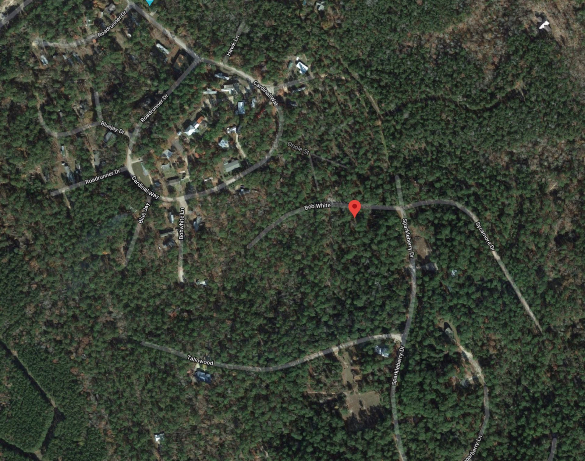 Build on Your Beautiful Lot in Texas Pineywoods! - Image 5 of 7