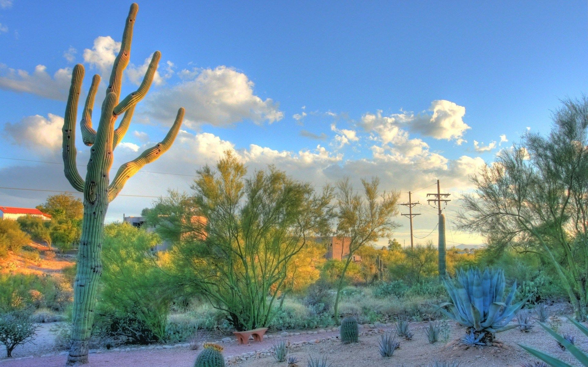 Mesmerizing Cochise County, AZ!