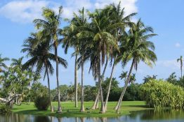 Own Your Very Own Property in the Sunshine State!