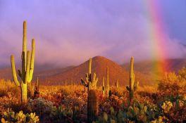 Over 2 Acres of Magnificent Arizona Views!