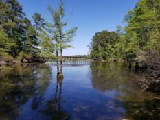 Build on Your Wooded Lot in the Texas Pineywoods!