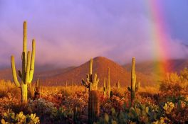 2.5 Acres of Magnificent Arizona Views!