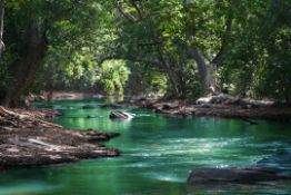 Experience the Peace River Preserve in Sunny Florida!