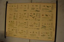 20th century German teaching scroll/ aid 'Graser'. Generally in good condition with some rips around
