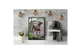 Noble Weimaraner In The Forest - Floater Frame Photograph- RRP £79.99.