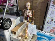 85CMS TEACHING SKELETON WITH NERVES AND BLOOD VESSELS