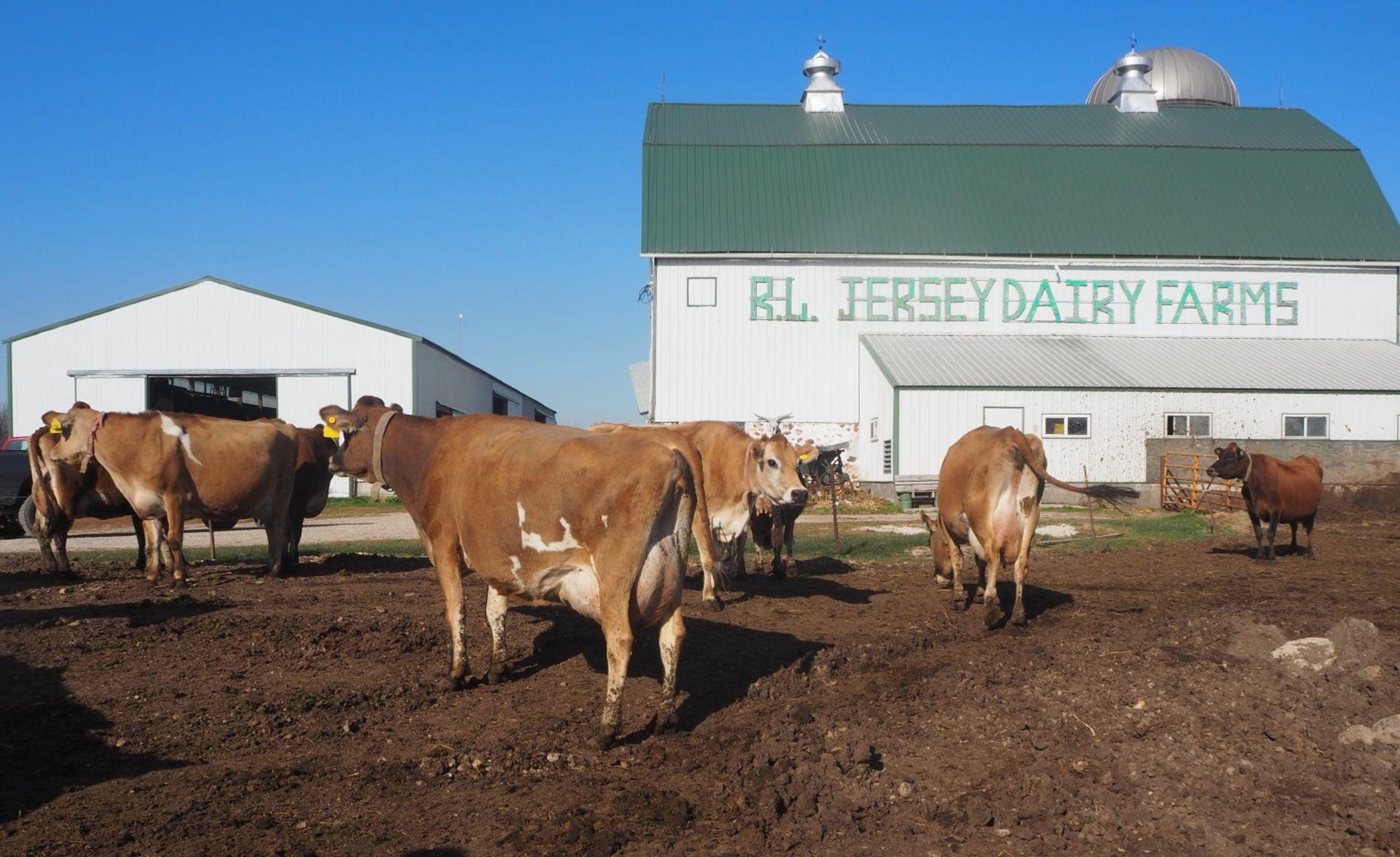 R.L Jersey Dairy Farms Retirement Auction, Thursday, April 8, 2021 10:00 a.m. Selling…complete - Image 2 of 3