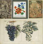 Dekorative Graphik Pflanzen. Frauen im Bade. Poesiealbum u.a. 10 versch. Techn. Bis 20,5 x 15,5 cm.
