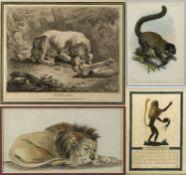 Tierdarstellungen Hund. Löwe. Hahn u.a. 6 Bll. versch. Techn. Bis 21 x 28 cm.