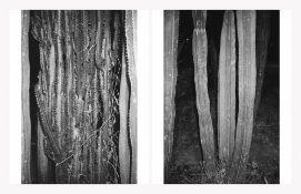 Adrian Crispin: Cacti I & Cacti II (diptych) (2018, Mexico City)