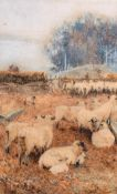 "Walter Bothams (c.1850-1914) British. Sheep Grazing in a Pen, Watercolour, Signed, 9.5"" x 6"" (24 x"