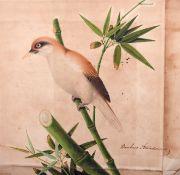 "Early 19th Century English School. ""Bambusa Arandinacia"", a Bird sitting on Bamboo Stalk,"