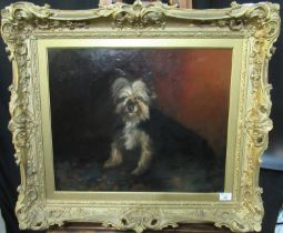 After George Armfield (British 19th Century), study of a terrier, oils on canvas. 48 x 46cm